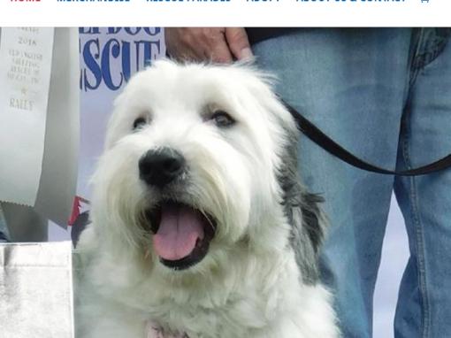 Web Design for Non-Profit Pet Rescue & Adoption, Santa Monica